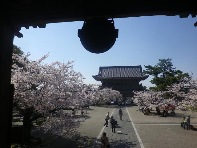 19)   18.03.30 鎌倉「光明寺」満開の桜