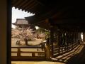 22)   18.03.30 鎌倉「光明寺」満開の桜