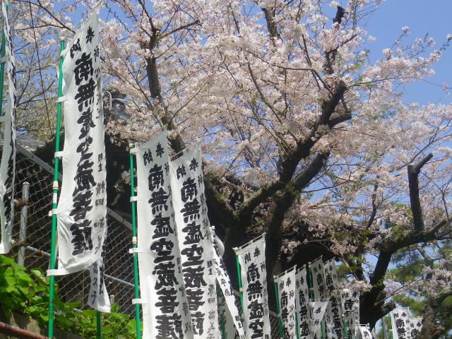 06-1)      18.03.30 鎌倉「星井寺」 ' 虚空蔵堂 ' 周辺の桜