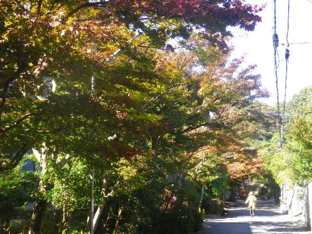 00-1) 紅葉のトンネルが観るのには時期尚早だった、「海蔵寺」手前の道。