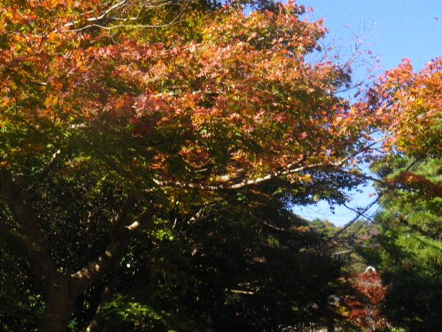 00-2) 「海蔵寺」手前の道