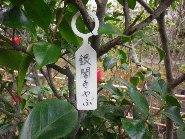9-01) 銀閣寺やぶ