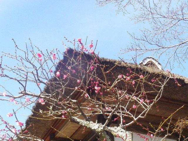 05-3) 背景は、江戸時代建立の二階建て庫裏。