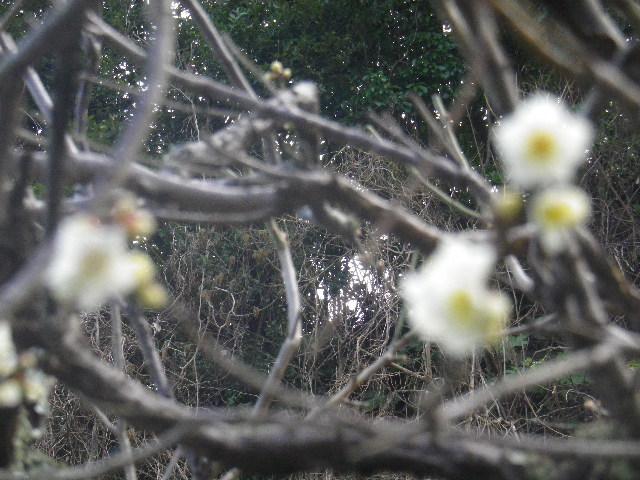 01-2-03) 15.02.21 早春の鎌倉「光則寺」