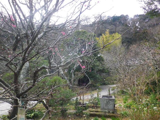 03-1) 15.02.21 早春の鎌倉「光則寺」