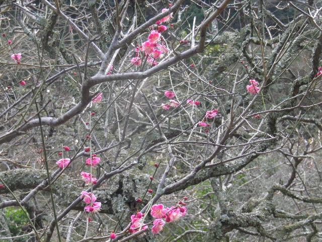 03-2) 15.02.21 早春の鎌倉「光則寺」