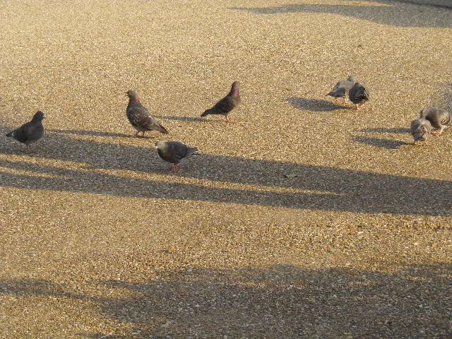 01) 鳩たちもノンビリ(食感/味覚以外での ' まったり ' 使用禁止!の独善的ルール)