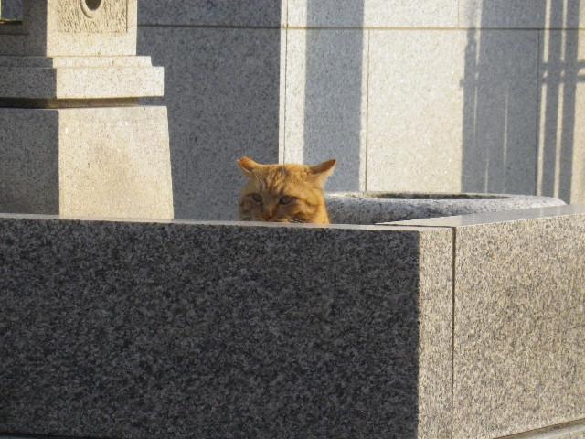 02-1) 見張り役らしきアレを発見! 私のルールで、神聖なる墓所(合祀墓)がモロ写りにならぬようコレはズームで撮った。