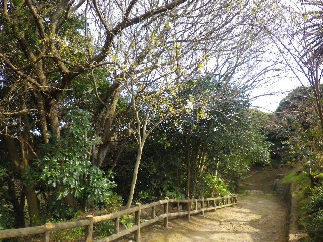 11-1) これでも、散策路の白い山桜を撮ったつもり。