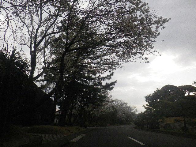 01) 15.04.01 逗子「披露山庭園住宅」邸宅の桜
