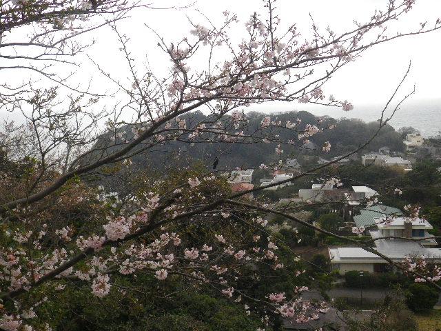06) 15.04.01 「逗子市立 披露山公園」の桜