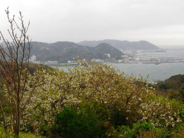 13-1) 15.04.01 「逗子市立 披露山公園」の桜