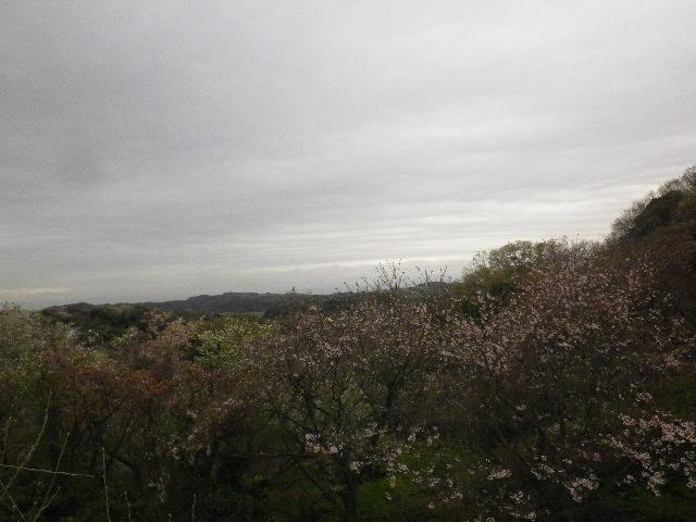 02) 「関東の富士見百景 富士山の見えるまちづくり 地点名.鎌倉市からの富士」 _ 15.04.04 通称 ' かまくら幼稚園うら ' の桜