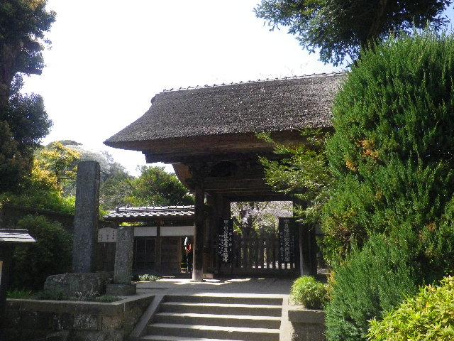 01) 15.04.06 鎌倉「極楽寺」桜が散り始める頃