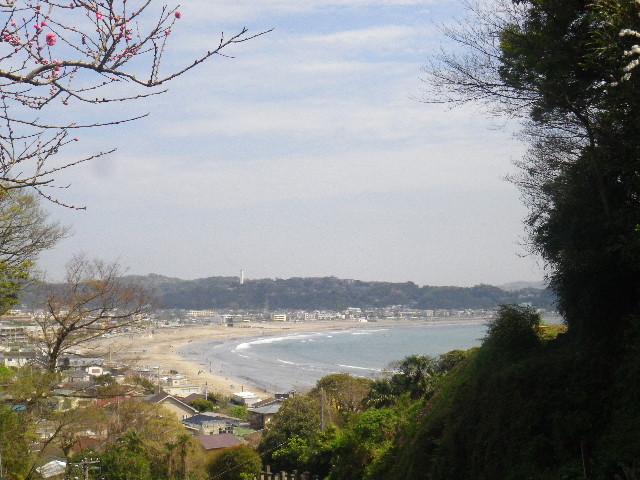 02-2) 15.04.06 鎌倉「成就院」桜咲く時期の終焉を見届ける