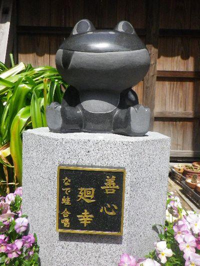 08-2) 15.04.06 鎌倉「成就院」桜咲く時期の終焉を見届ける