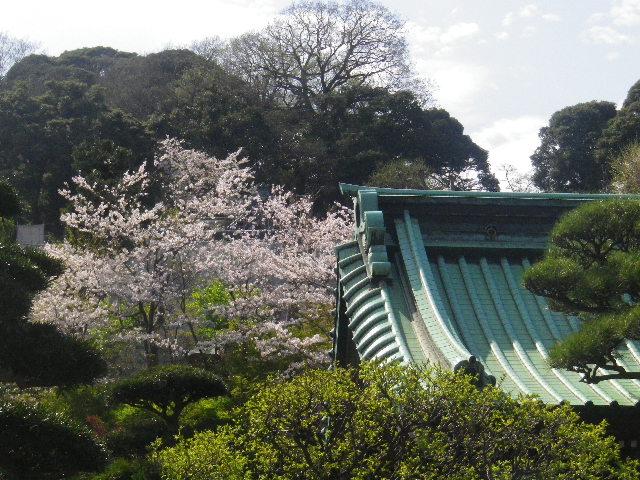 03-1)  15.04.06 桜咲く頃、鎌倉「長谷寺」を外部から眺めた。