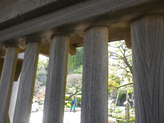 12)  15.04.06 桜咲く頃、鎌倉「長谷寺」を外部から眺めた。
