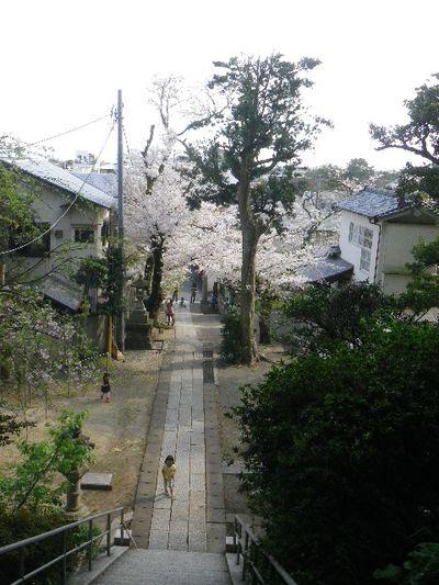 10) 15.04.06 ' 山の音 '、鎌倉最古「甘縄神明宮」桜の頃。