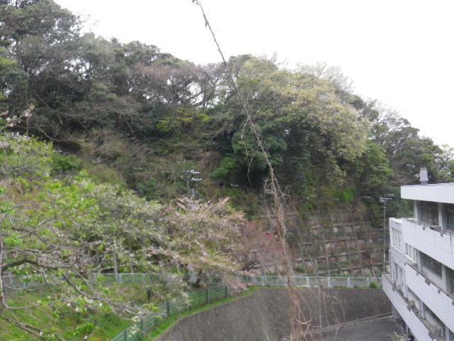 02-2) 連日連夜の風雨で花が吹き飛ばされた桜
