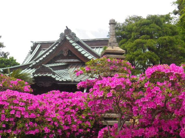 02-3) 15.05.05 ツツジがピークの、鎌倉「安養院」。