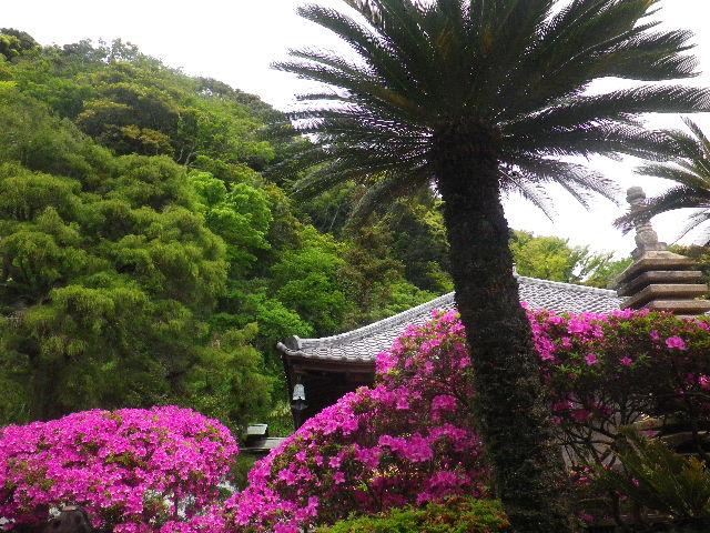 03-3) 15.05.05 ツツジがピークの、鎌倉「安養院」。