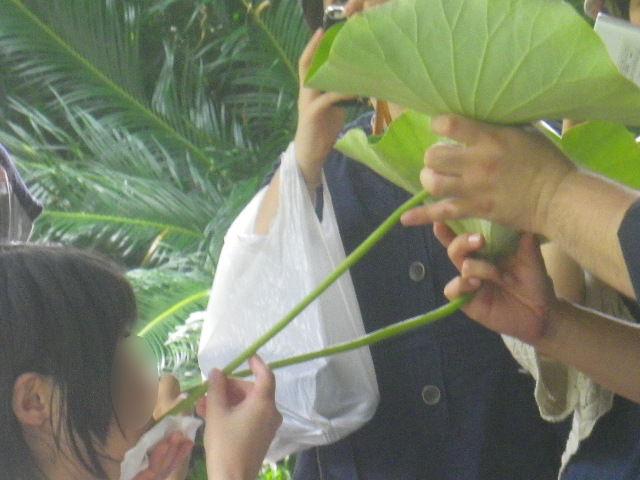 05-2) 蓮の葉 → 茎 で酒