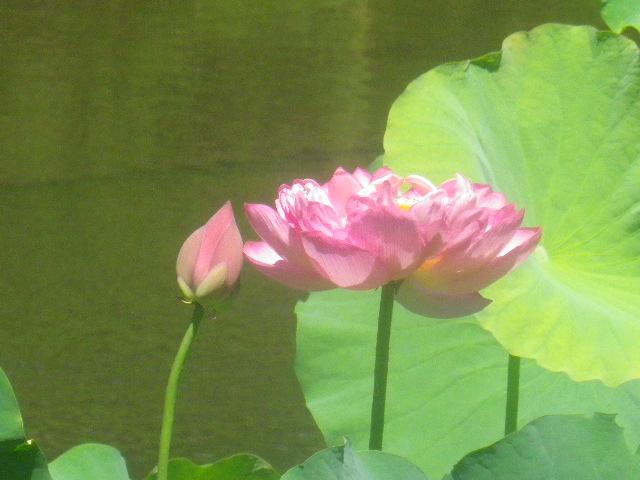 05)  15.08.05 鎌倉「光明寺」