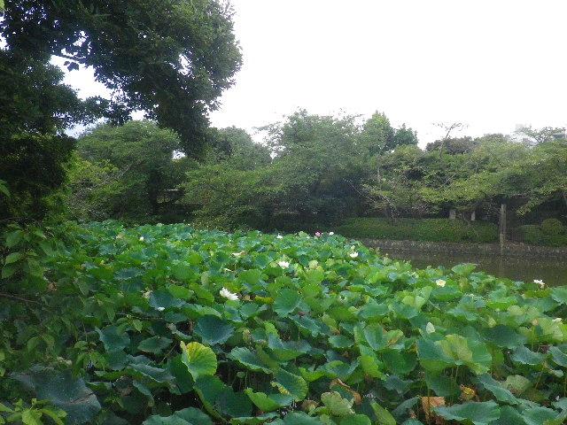 01-4) ' 源氏池 '  _ 「鶴岡八幡宮」 鎌倉市雪ノ下