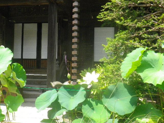 06-1) _ 15.08.09 鎌倉「大巧寺」初秋と呼ぶには早過ぎの感あり、立秋の翌日。