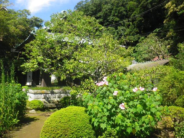 02) 15.09.12 鎌倉「海蔵寺」萩が咲く頃