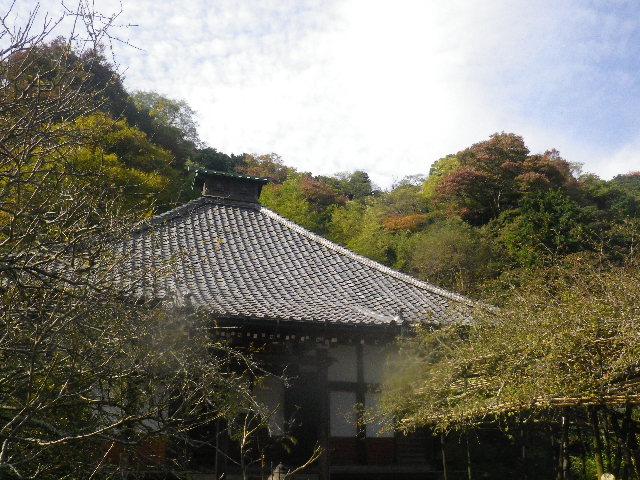 04)  15.11.17 初冬の鎌倉「光則寺」