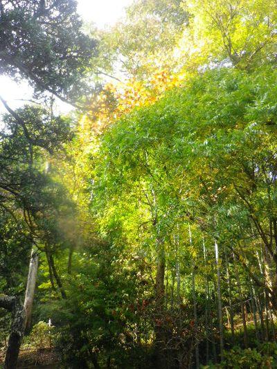 07)  15.11.17 初冬の鎌倉「光則寺」