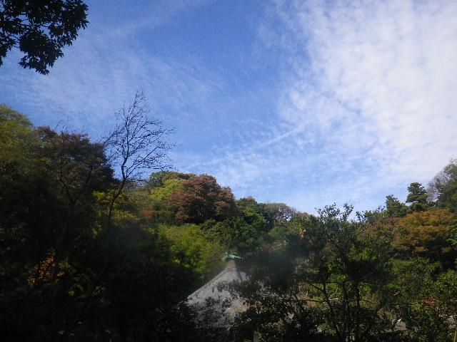 11)  15.11.17 初冬の鎌倉「光則寺」