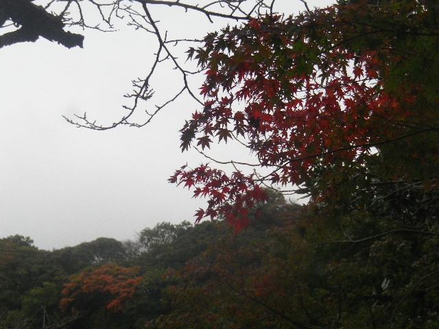 03-4) ' 名越(なごえ)ハイキングコース ' の山を背景に、先に色づき始めた紅葉。