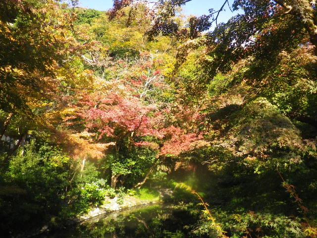 02-2a) ' 柳原神池 ' 周辺 _ 15.11.30 鎌倉「鶴岡八幡宮」葉が色づき始める頃