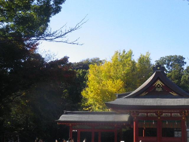 03-1a) ' 舞殿 ' 周辺 _ 15.11.30 鎌倉「鶴岡八幡宮」葉が色づき始める頃