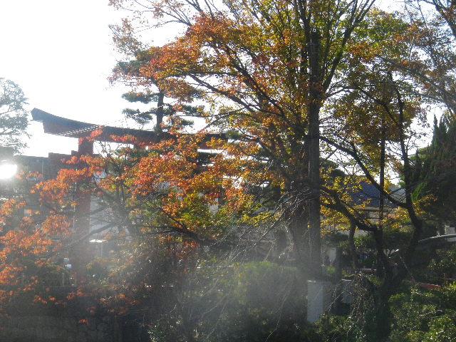 04-4)  ' 旗上弁財天社 ' 橋の前から、' 三の鳥居 ' 方向。 _ 15.11.30 鎌倉「鶴岡八幡宮」葉が色づき始める頃