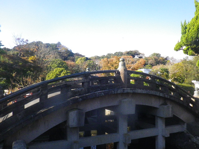 08b) 神苑ぼたん庭園入り口前から、' 太鼓橋 ' 方向 _ 15.11.30 鎌倉「鶴岡八幡宮」葉が色づき始める頃