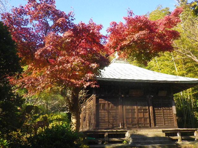 02-2)  15.11.30 鎌倉「浄光明寺」葉が色づく頃