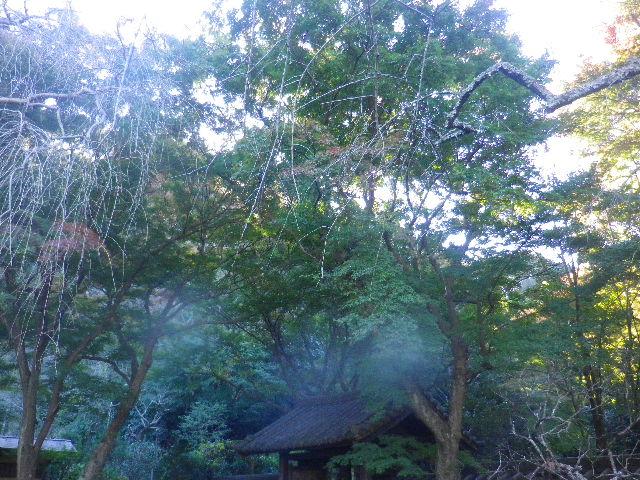 31) _ 15.12.05 鎌倉「瑞泉寺」紅葉は、微妙に もう少し先。