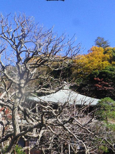 33-1) _ 15.12.05 鎌倉「瑞泉寺」紅葉は、微妙に もう少し先。