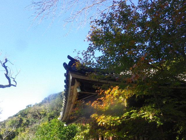 38) _ 15.12.05 鎌倉「瑞泉寺」紅葉は、微妙に もう少し先。