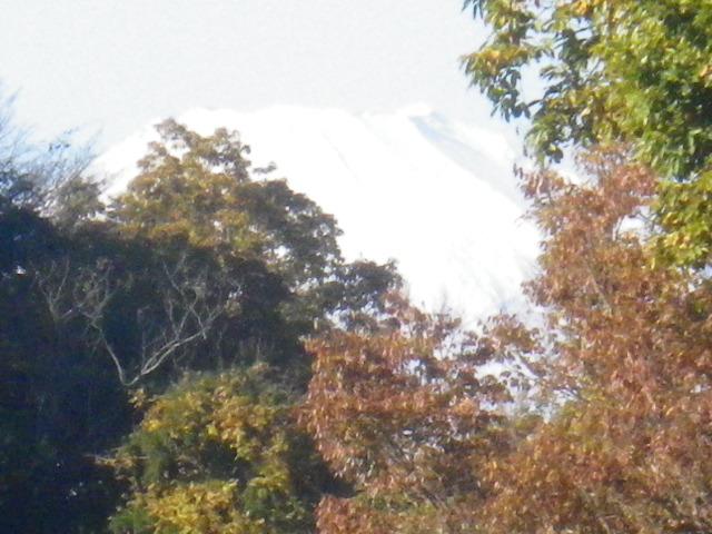 42-2) 今日は富士山が見えた _ 藤棚ベンチ周辺から _ 15.12.05 鎌倉「瑞泉寺」紅葉は、微妙に もう少し先。