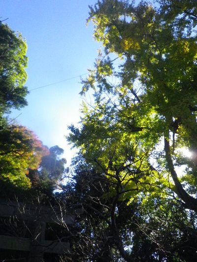 02) _ 15.12.05 鎌倉「荏柄天神社」受験合格祈願者が集う頃