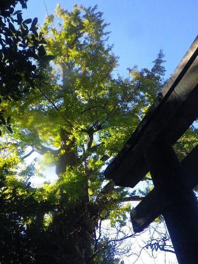 03) _ 15.12.05 鎌倉「荏柄天神社」受験合格祈願者が集う頃