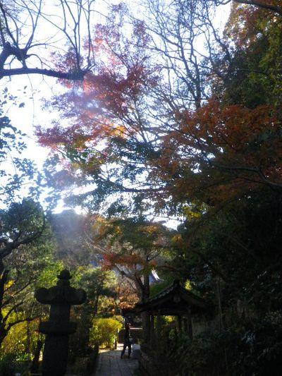 02)   15.12.12 鎌倉「安国論寺」連日の強風を豪雨にも耐えた紅葉と黄葉