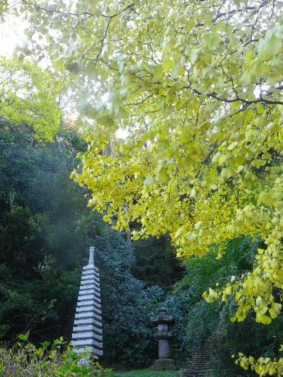 09-3)   15.12.12 鎌倉「安国論寺」連日の強風を豪雨にも耐えた紅葉と黄葉