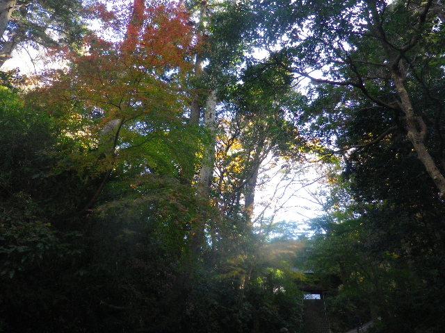 02)  15.12.12 鎌倉「妙本寺」紅葉の最盛期