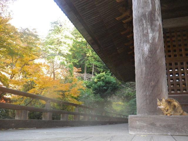 11-2)  15.12.12 鎌倉「妙本寺」紅葉の最盛期
